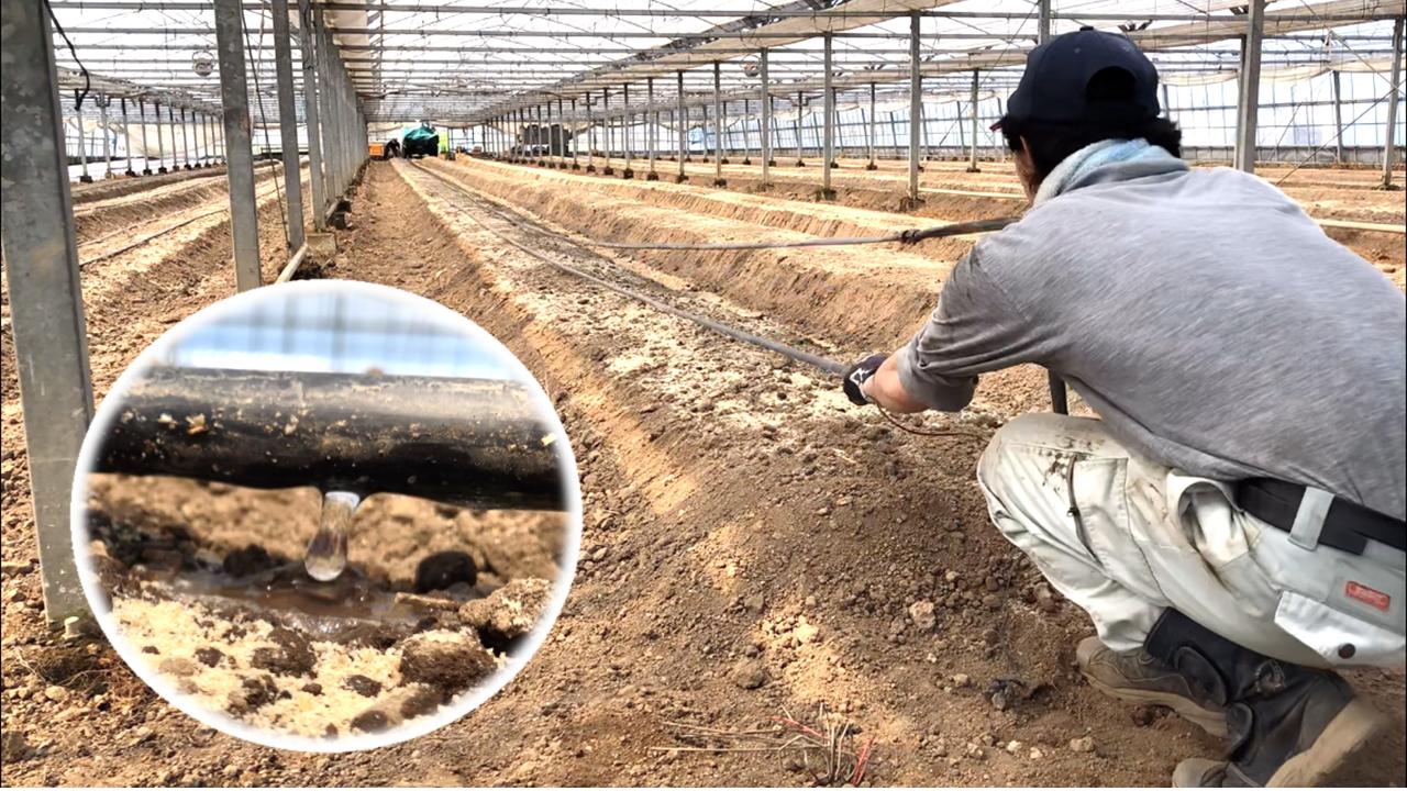 灌水チューブを設置する